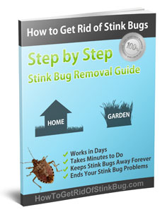Download the complete guide to eliminating stink bugs - How to get rid of stink bugs in garden ...