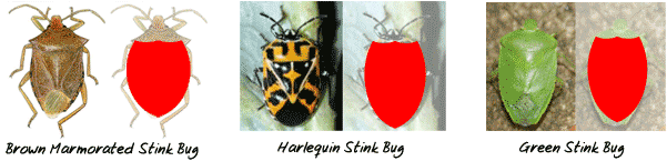 Stink Bug Shield